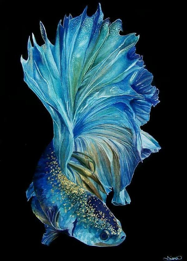 Ưu tiên chọn cá Betta màu xanh bởi chúng thích nghi với môi trường sống trong hồ tốt hơn