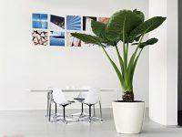Đón đầu xu hướng thuê cây cảnh văn phòng tạo mảng xanh mát mắt
