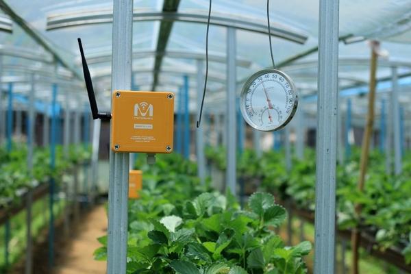 Kỹ thuật số trong nông nghiệp: chìa khóa cho sự bền vững và tiết kiệm chi phí