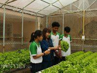 Sau những giờ học trên lớp, học sinh sẽ được cô Hồng hướng dẫn chăm sóc rau tại vườn. Ảnh: Văn Long.
