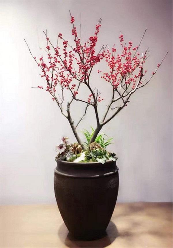 Khi chọn mua đào tiêu chí mà bạn cần quan tâm đó là quan sát toàn bộ cây để có được thông tin về hình dáng, thế đứng, cành lá và nụ hoa,…