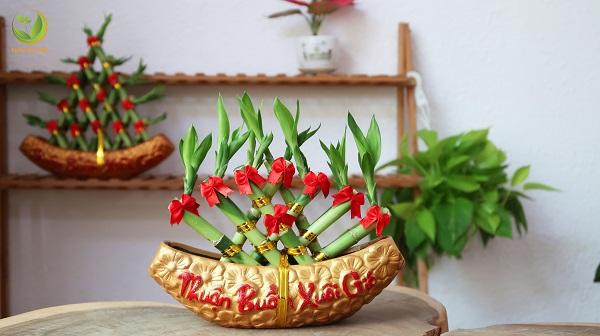 Cây Phát Lộc thuyền Là biểu tượng của may mắn, bình an, hạnh phúc