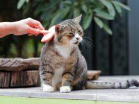8 Cách Xử Lý Tình Trạng Rụng Lông Ở Mèo