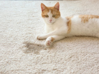 Cách Đơn Giản Để Khử Mùi Nước Đái Mèo