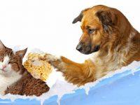 Có nên tắm chó mèo thường xuyên hay không?