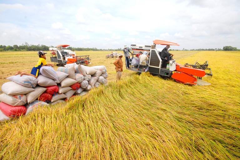 Vụ lúa năm nay trên ĐBSCL người dân được mùa, được giá