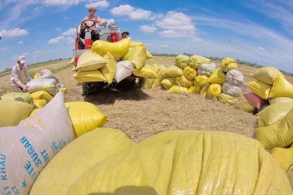 Xuất khẩu lúa gạo tăng hơn 30%