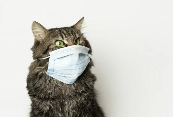 Cách chữa sổ mũi cho mèo