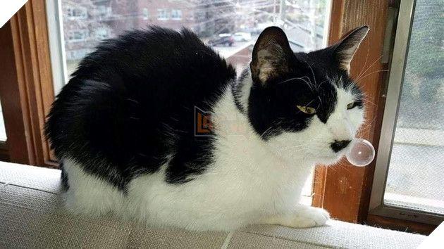 Cách phòng bệnh sổ mũi ở mèo