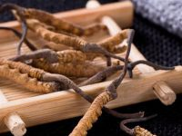 Phân loại các loại đông trùng hạ thảo